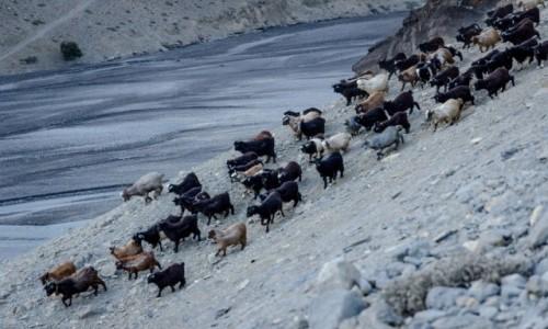 Zdjęcie NEPAL / Mustang / Kagbeni / wieczorny spęd...