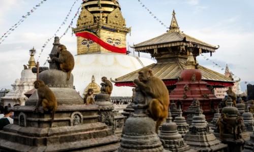 Zdjęcie NEPAL / Katmandu / Swayambunath / małpi raj...