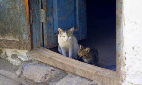 Zdjecie NEPAL / - / Mustang / Koty