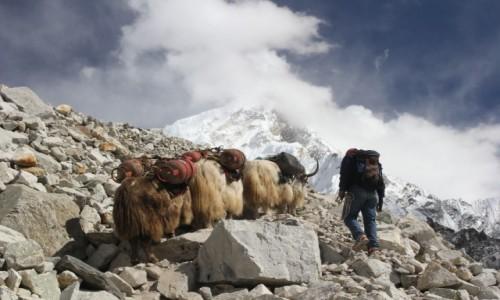 Zdjecie NEPAL / Park Narodowy Sagarmatha / Lobuche-Gorak Shep / W drodze