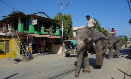 Zdjecie NEPAL / Południowy Nepal / Chitwan / W miasteczku