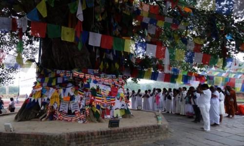 Zdjecie NEPAL / Południowy Nepal / Lumbini / Modlitwa