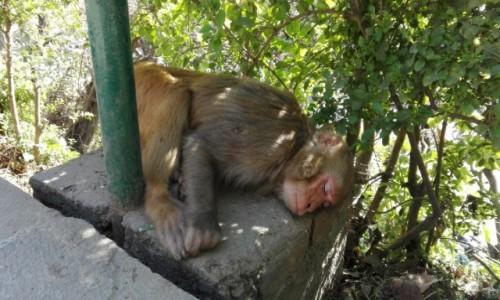 Zdjecie NEPAL / Katmandu / Świątynia Małp / Nie przeszkadzać