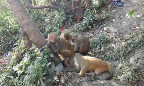 Zdjecie NEPAL / Katmandu / Świątynia Małp / Drzemka