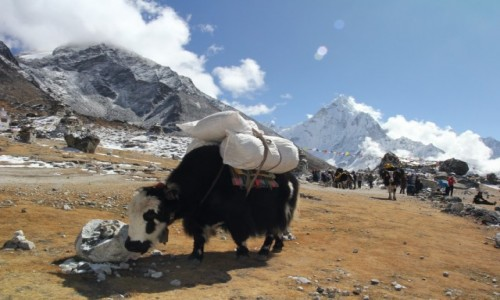 Zdjecie NEPAL / Park Narodowy Sagarmatha / Dingboche-Lobuche / Jakie jaki!