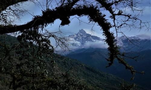 Zdjecie NEPAL / Pokhara / Ze szlaku na Matdi Himal / Machhapuchhare