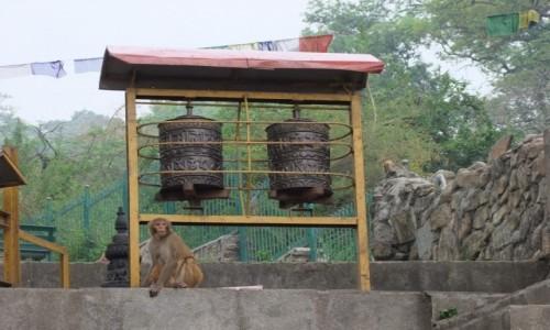 Zdjecie NEPAL / Kathmandu / Kathmandu / Swayambunath, świątynia małp