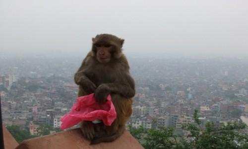 Zdjecie NEPAL / Kathmandu / Kathmandu / Kathmandu