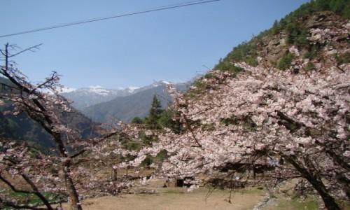 Zdjecie NEPAL / Khumbu / Dolina Dudh Koshi / Dolina Dudh Koshi