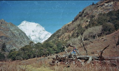 Zdjecie NEPAL / Api Nampa region, Darchula / Las / Piekne lasy w drodze na Api Himal