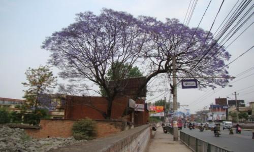 Zdjecie NEPAL / Kathmandu / Kathmandu / Uliczki Kathmandu
