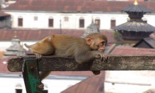 Zdjecie NEPAL / Kathmandu / Kathmandu / Kazdy potrzebuje odpoczynku:)