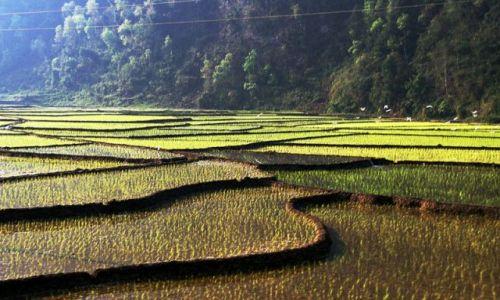 Zdjecie NEPAL / brak / W drodze do Katmandu / Tarasy