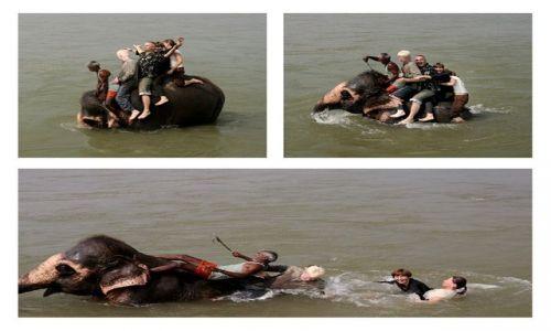 Zdjęcie NEPAL / Rapti / Chitwan / kąpiel ze słoniami