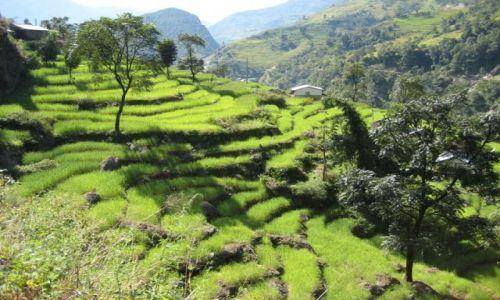 Zdjecie NEPAL / Himalaje / Okolice Bahundanda / Pola ryżowe w Himalajach Nepalu