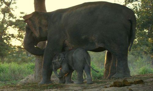 Zdjecie NEPAL / Madhyamańćal Wikas Kszetr  / Chitwan / Mały nie wytrzymał...
