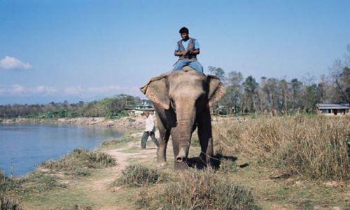 Zdjęcie NEPAL / brak / Chitwan / Jeździec