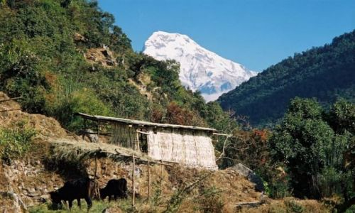 Zdjęcie NEPAL / -Masyw Annapurny / Szlak: Tikedunga - Ghorepani / Annapurna South