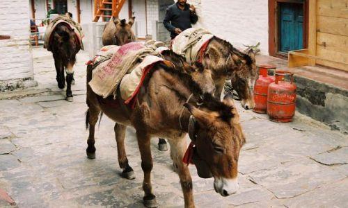 Zdjęcie NEPAL / -Masyw Annapurny / Birethanti / Turyści