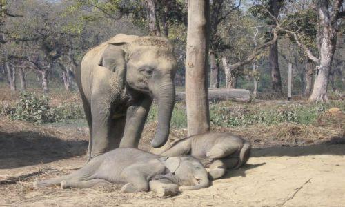 Zdjecie NEPAL / brak / Chitwan Park / Z mamą w tle