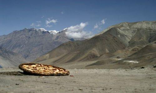 Zdjecie NEPAL / Annapurna Conservation Area / okolice Jharkot / jabłuszka