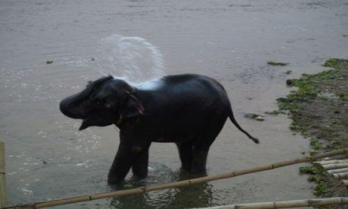 Zdjecie NEPAL / brak / Park Chitwan / Wieczorna kąpiel młodego słonia