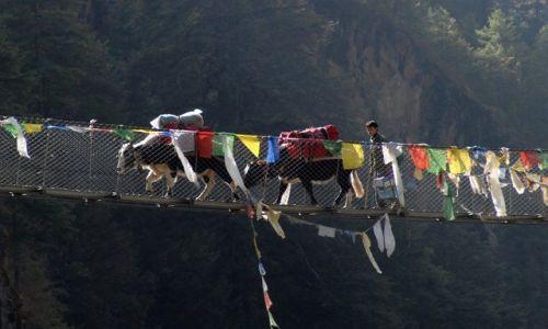 Zdjecie NEPAL / Khumbu Valley / Nepal / Yaki na zawieszonym moscie