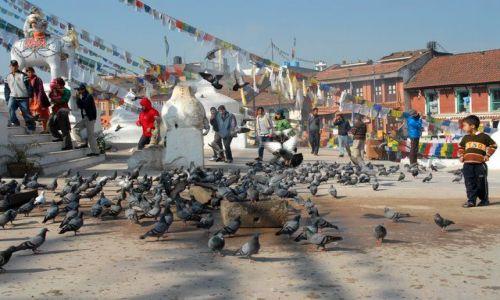 Zdjecie NEPAL / Kathmandu valley / Kathmandu / Bodhnath Stupa