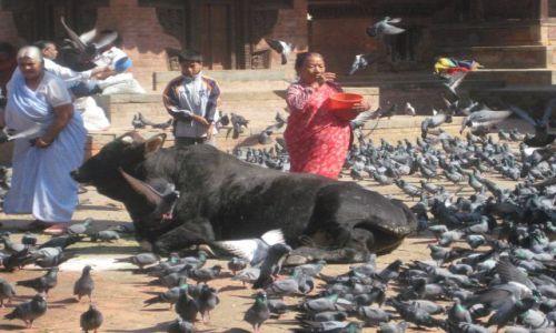 Zdjecie NEPAL / brak / Kathmandu / Ani chwili spokoju!