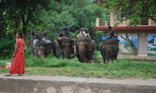 Zdjęcie NEPAL / południowy Nepal / Chitwan National Park / Elephant Taxi