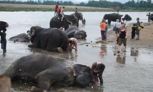 Zdjęcie NEPAL / południowy Nepal / Chitwan National Park / Elephant spa
