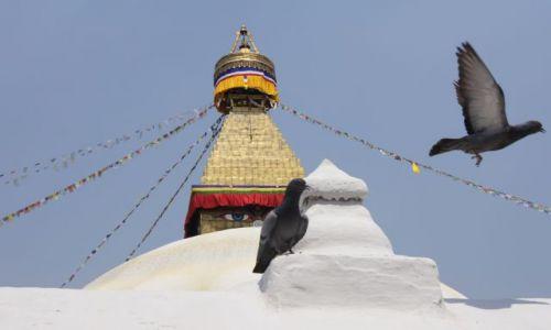 Zdjecie NEPAL / Kathmandu / Kathmandu / Stupa Boudhanath