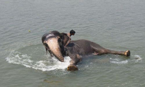 Zdjecie NEPAL / Chit Wan / Chit Wan / słoń w kąpieli