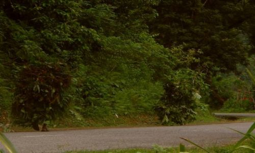 Zdjęcie NEPAL / Chitwan / Okolice / Nie ma to jak kamuflaż w dżunglii ;)