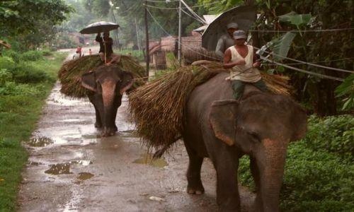 Zdjęcie NEPAL / Chitwan / Wioska / Rolnicy przy pracy