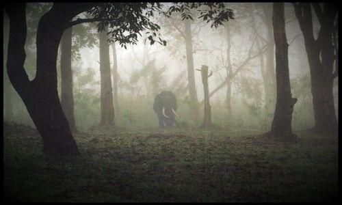 Zdjecie NEPAL / - / Chitwan national park / Morning elephan