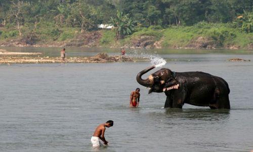 NEPAL / Terai  / Chitwan PN / Chitwan