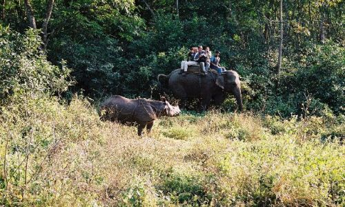 NEPAL / Terai / Chitwan / foto safari