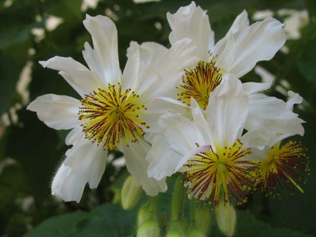 Zdjęcia: Grossedlitz, kwiaty w parku Grossedlitz, NIEMCY