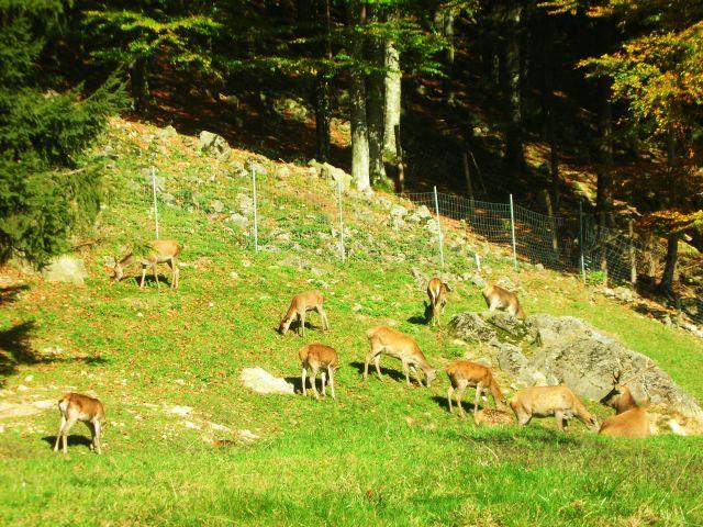 Zdjęcia: oberried, schwarzwald, park natury i rozrywki, NIEMCY