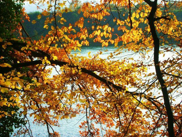 Zdjęcia: nad renem, baden-württenberg, jesien nad renem, NIEMCY