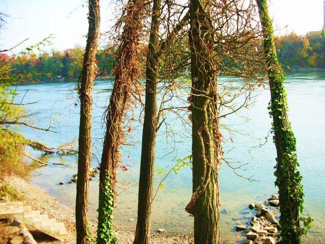Zdj�cia: nad renem, baden-w�rttenberg, jesien nad renem, NIEMCY