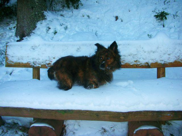 Zdj�cia: schluchsee, schwarzwald, zima2007, NIEMCY