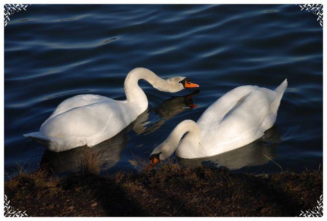 Zdjęcia: wyhlen park ptaköw, baden-württenberg, nietypowe lecz walentykowe, NIEMCY