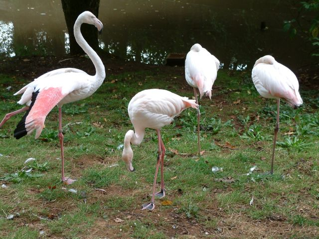 Zdj�cia: berlin, brandenburgia, park ptak�w, NIEMCY