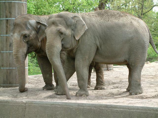 Zdjęcia: berlin, brandenburgia, zoo, NIEMCY
