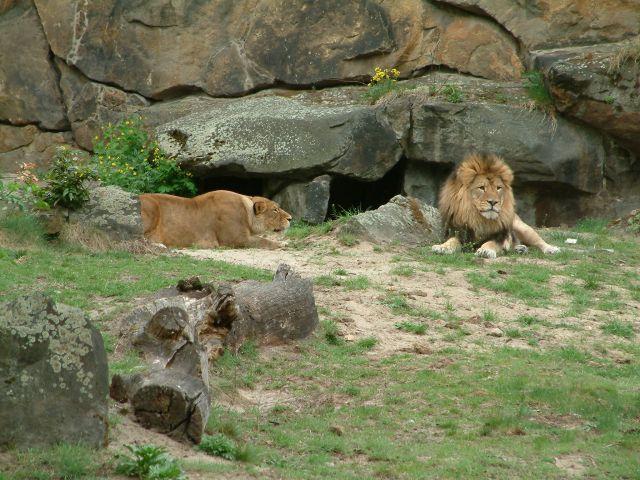 Zdj�cia: berlin, brandenburgia, zoo2, NIEMCY