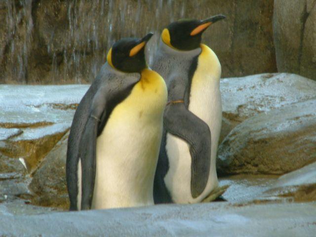 Zdjęcia: berlin, brandenburgia, zoo5, NIEMCY