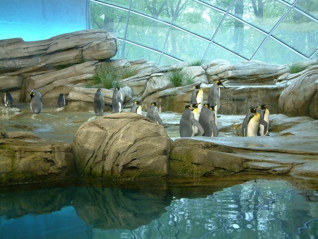 Zdjęcia: berlin, brandenburgia, zoo6, NIEMCY