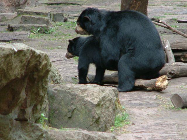 Zdj�cia: berlin, brandenburgia, zoo, NIEMCY